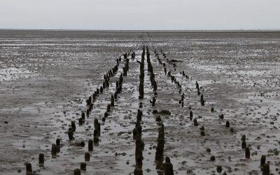 Silence of the Tides (IDFA)